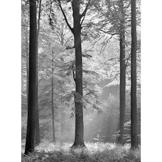 Avalon Nature Forest Theme 5401 -4