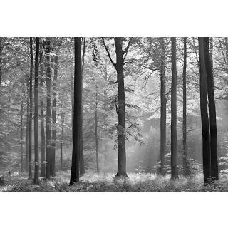 Avalon, Nature, Forest Theme 5401-8