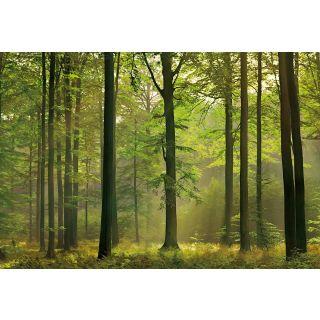 Autumn Forest Nature 5419-8