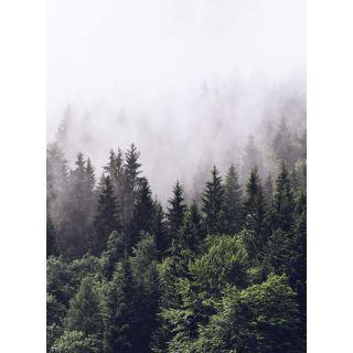 Forest Mist Natural Forest 5433-4