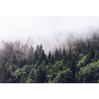 Forest Mist  Natural Forest 5433-8