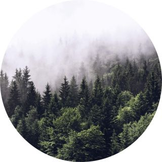 Forest Mist Natural Forest 5433-R