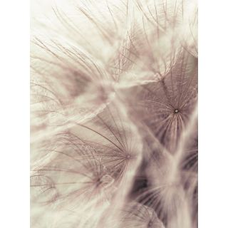 Dandelion Close up Nature Flowers Theme 5516-4